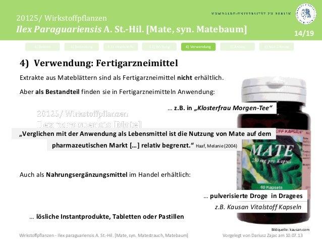 Mate-Baum Yerba Mate Ilex paraguariensis Getränk 30 Samen Mate-Strauch Tee