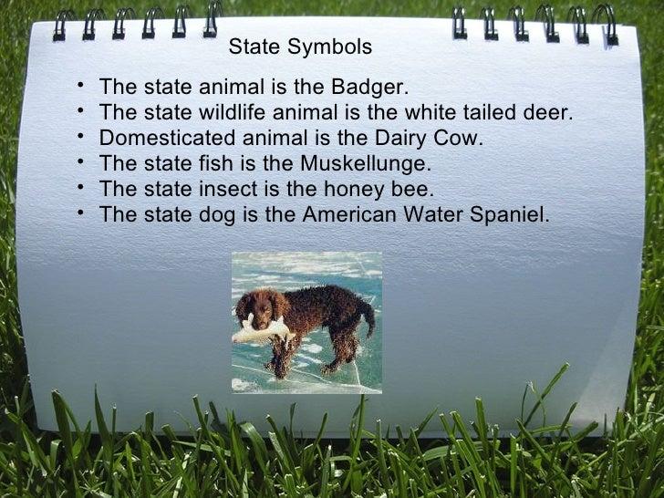<ul><ul><li>The state animal is the Badger. </li></ul></ul><ul><ul><li>The state wildlife animal is the white tailed dee...