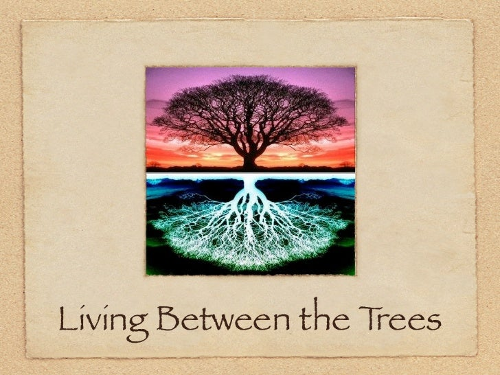 Living Between the Trees