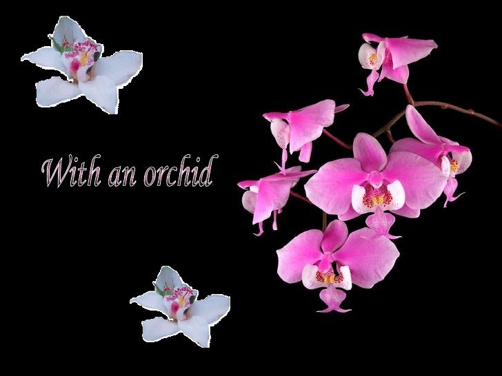 With an orchid