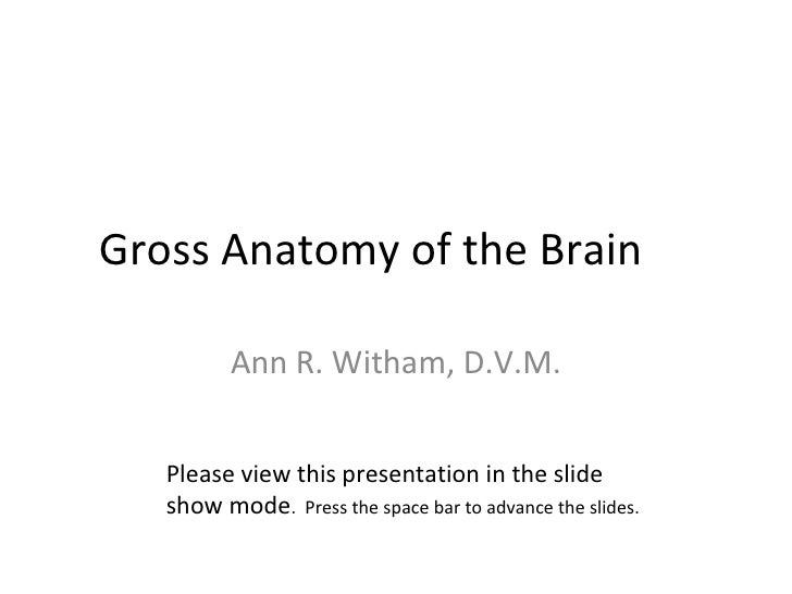 Gross Anatomy of the Brain Ann R. Witham, D.V.M. Please view this presentation in the slide show mode .  Press the space b...