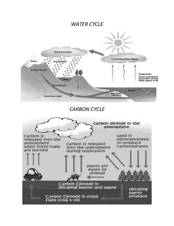 WATER CYCLECARBON CYCLE