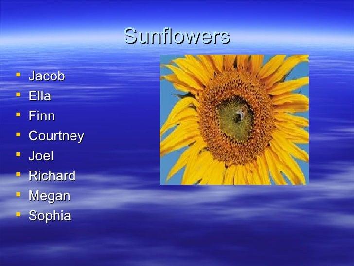 Sunflowers <ul><li>Jacob </li></ul><ul><li>Ella </li></ul><ul><li>Finn </li></ul><ul><li>Courtney </li></ul><ul><li>Joel <...
