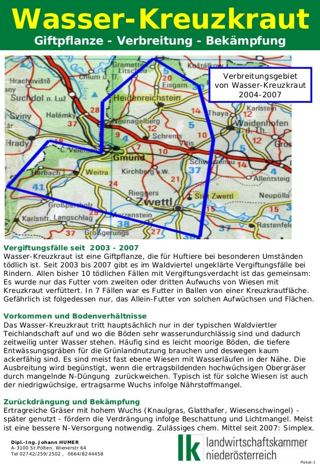 Plakat-1 Wasser-Kreuzkraut Giftpflanze - Verbreitung - Bekämpfung Vergiftungsfälle seit 2003 - 2007 Wasser-Kreuzkraut ist ...