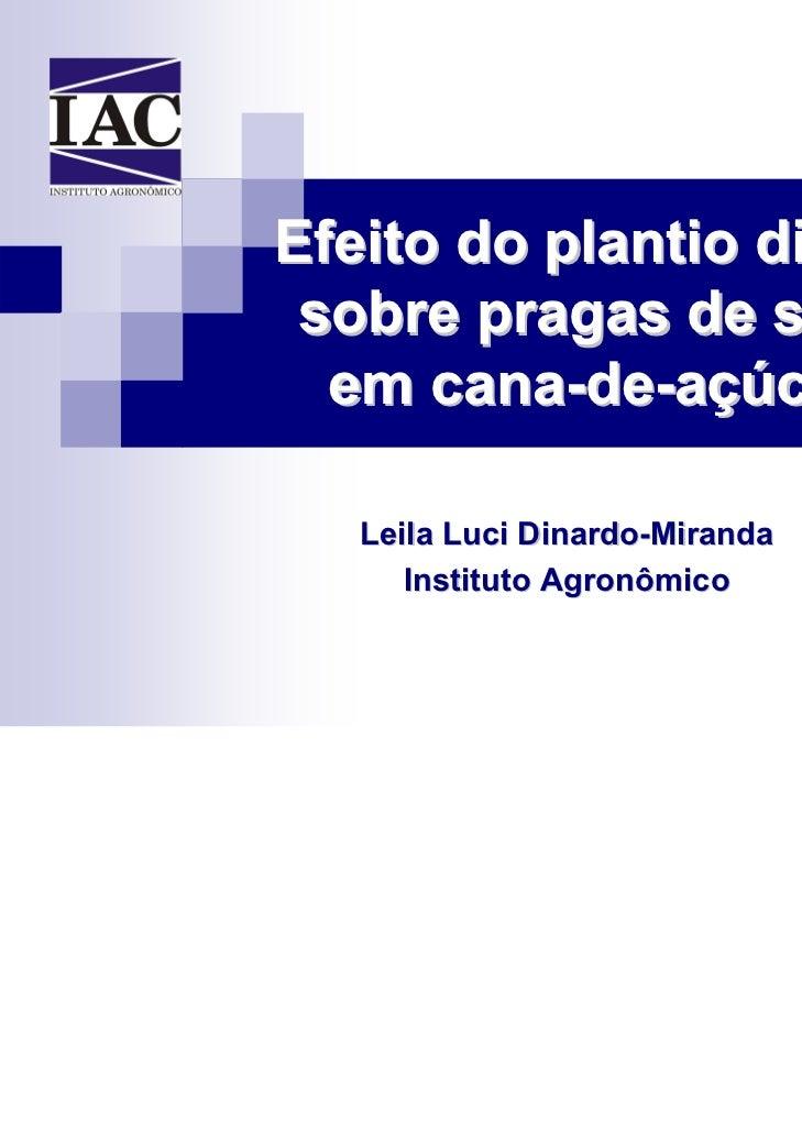 Efeito do plantio direto sobre pragas de solo  em cana-de-açúcar   Leila Luci Dinardo-Miranda      Instituto Agronômico