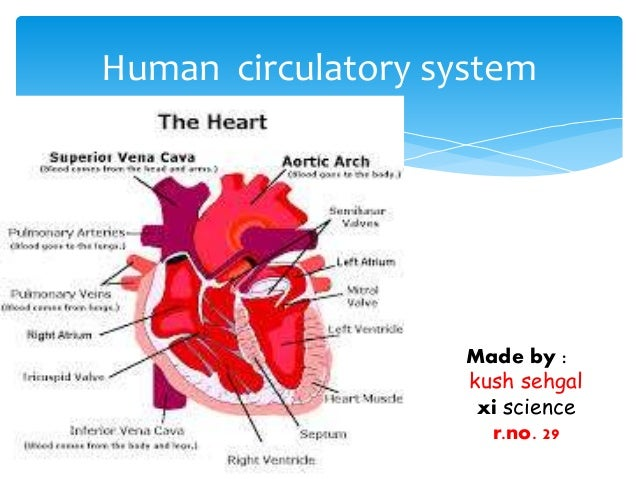 Circulatory system class 11 cbse for Home circulation system