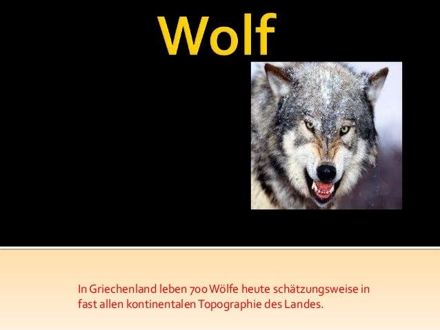 In Griechenland leben 700 Wölfe heute schätzungsweise infast allen kontinentalen Topographie des Landes.