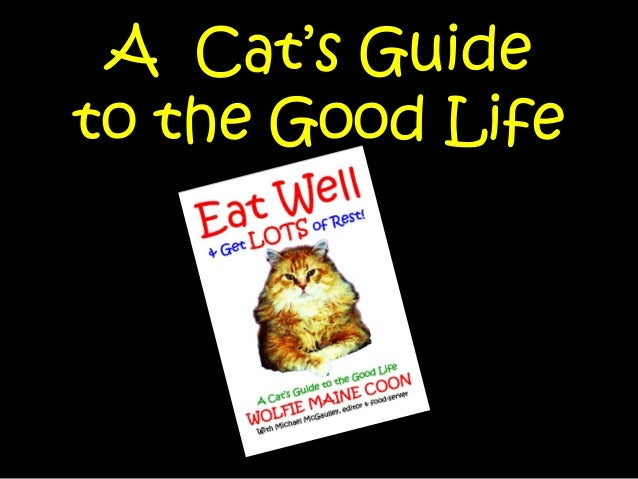 A Cat's Guide to the Good Life