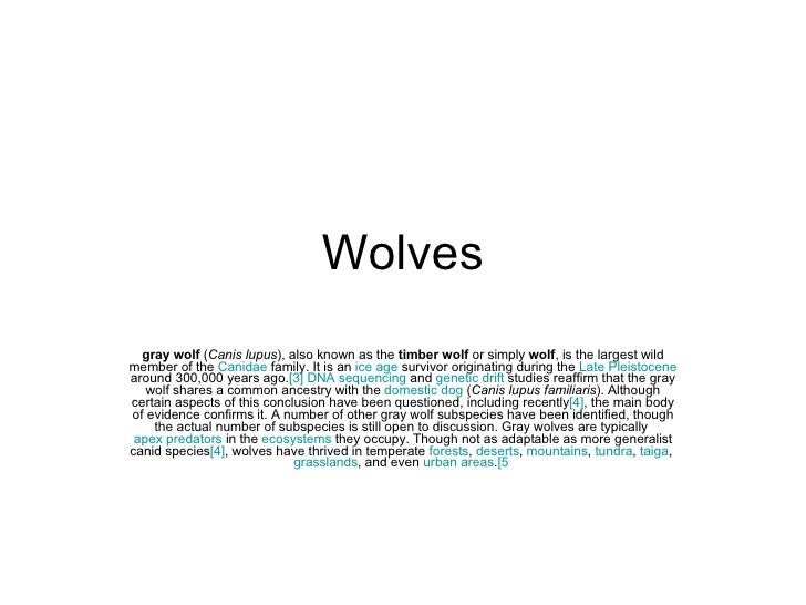 Wolves gray wolf  ( Canis lupus ), also known as the  timber wolf  or simply  wolf , is the largest wild member of the  Ca...