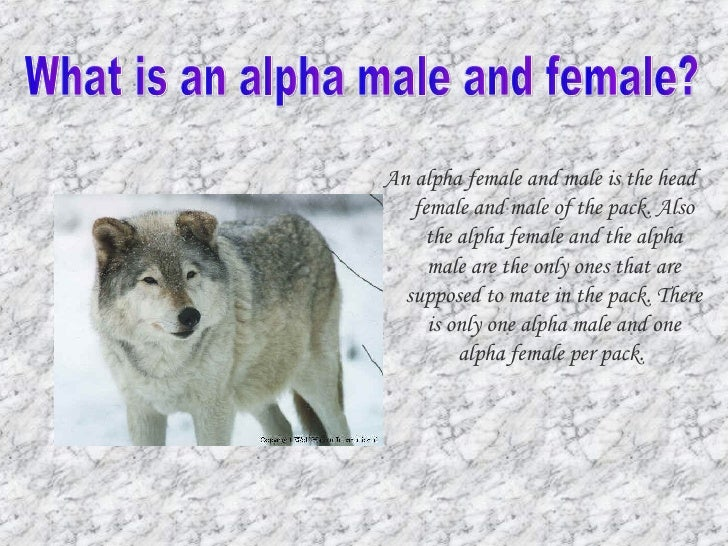 alpha male and alpha female