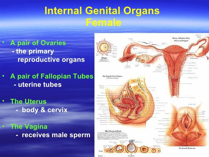Womens Disorders ppt