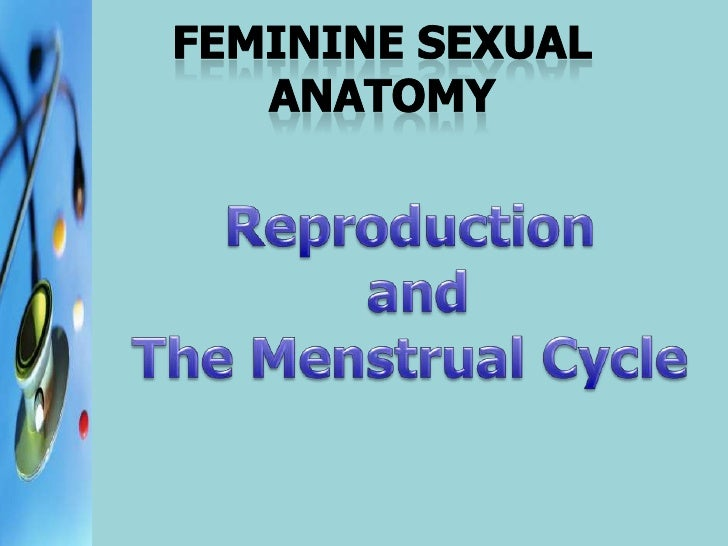 Feminine SEXUAL ANATOMY<br />Reproduction<br /> and <br />The Menstrual Cycle<br />