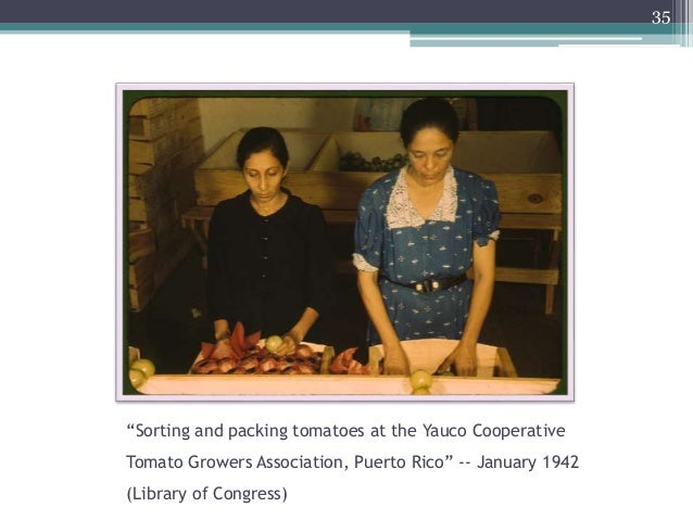 """""""Sorting and packing tomatoes at the Yauco Cooperative Tomato Growers Association, Puerto Rico"""" -- January 1942 (Library o..."""