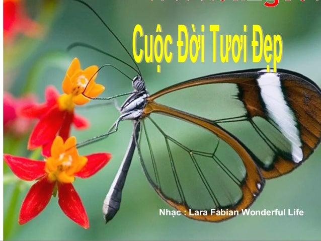 Nhạc : Lara Fabian Wonderful Life