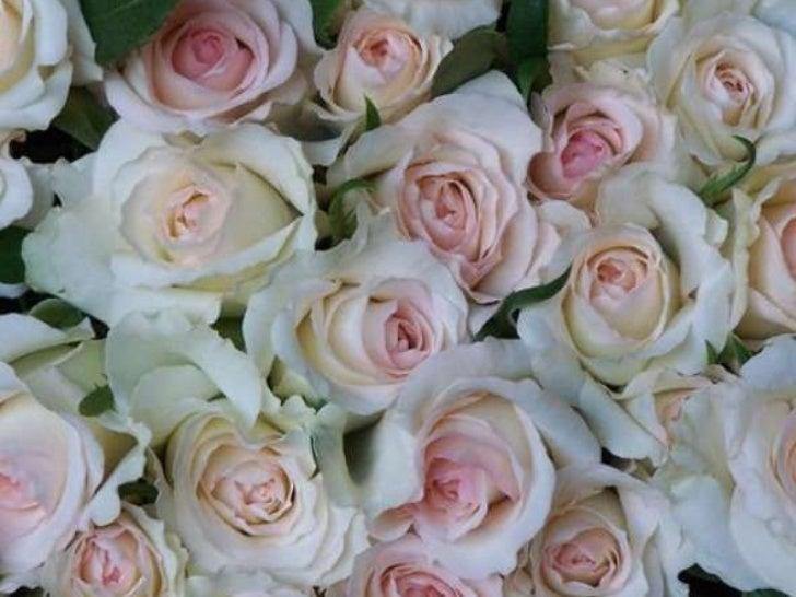 Wonderful flowers<br />