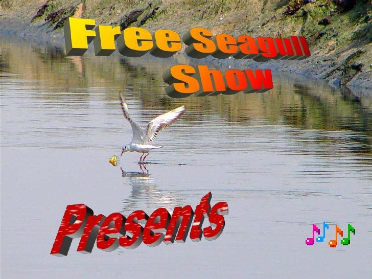 Free Seagull<br />Show<br />Presents<br />