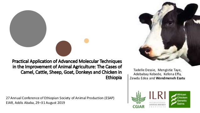 Practical Application of Advanced Molecular Techniques in the Improvement of Animal Agriculture: The Cases of Camel, Cattl...