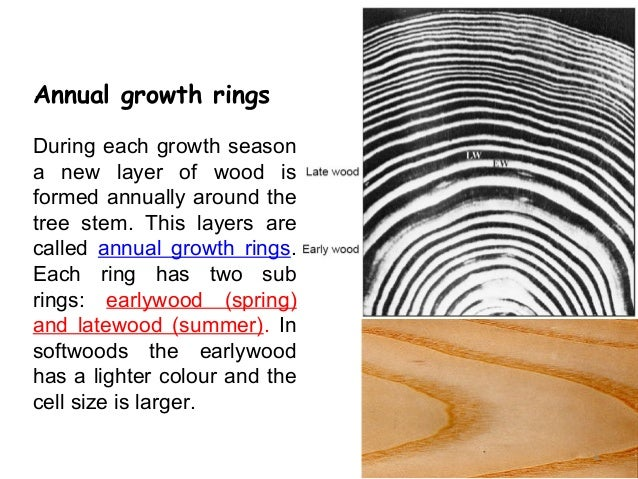 Wood microstructure annual ccuart Images
