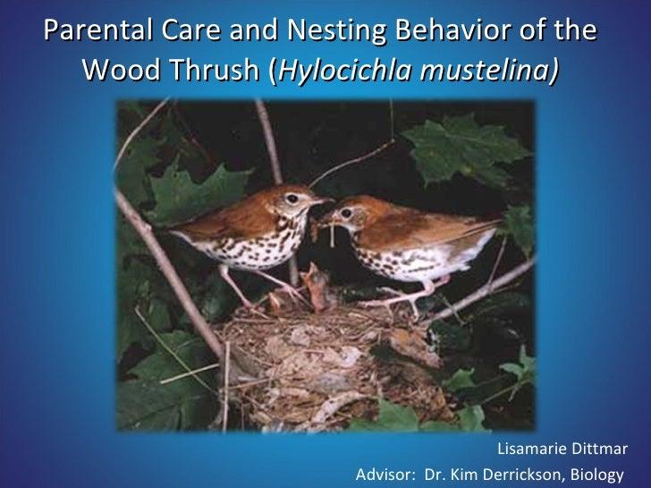 Parental Care and Nesting Behavior of the Wood Thrush ( Hylocichla mustelina) Lisamarie Dittmar Advisor:  Dr. Kim Derricks...