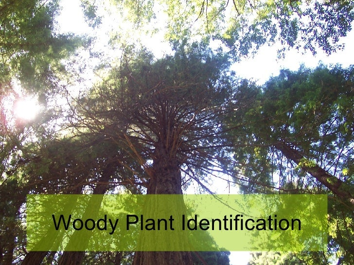 Woody Plant Identification