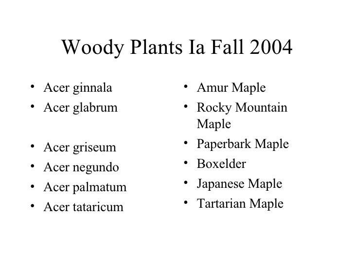 Woody Plants Ia Fall 2004 <ul><li>Acer ginnala </li></ul><ul><li>Acer glabrum </li></ul><ul><li>Acer griseum </li></ul><ul...