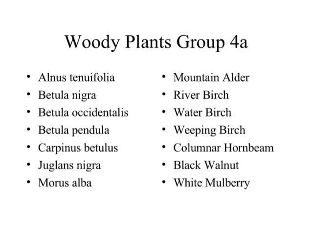 Woody Plants Group 4a  Alnus tenuifolia ' Mountain Alder Betula nigra ' River Birch    Betula occidentalis * Water Birch B...