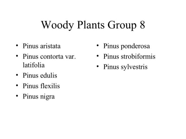 Woody Plants Group 8 • Pinus aristata        • Pinus ponderosa • Pinus contorta var.   • Pinus strobiformis   latifolia   ...
