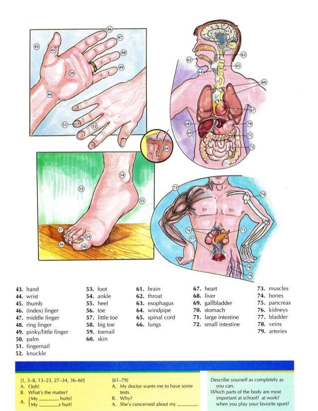 Ausgezeichnet Anatomie Und Physiologie 2 Labor Praktische Modelle ...