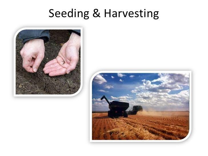 Seeding & Harvesting