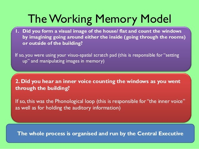 working memory model essay plan Give a brief account of and evaluate the working memory model of the human memory the working memory model was made and working memory model 12 mark question essay.