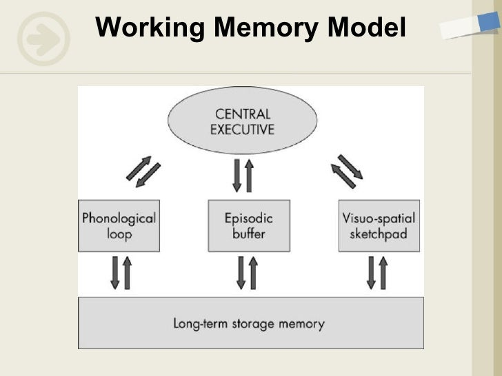 the working memory model Free essay: this essay addresses the working memory model which was proposed by baddeley and hitch (1974 in smith & kosslyn, 2007) as a response to.