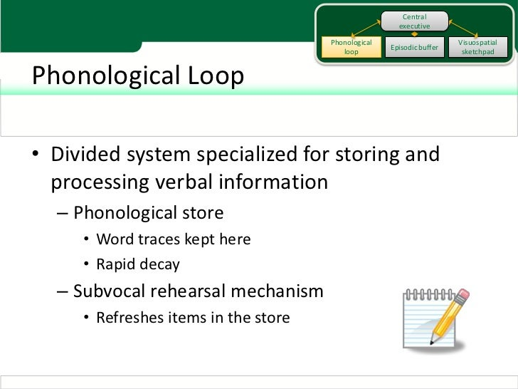 phonological neighborhood size on verbal short term memory Alan baddeley and graham hitch proposed a model of working memory in 1974,  the phonological loop stores verbal content, whereas the visuo-spatial sketchpad caters to visuo-spatial data  a defective phonological store explains the behavior of patients with a specific deficit in phonological short-term memory.