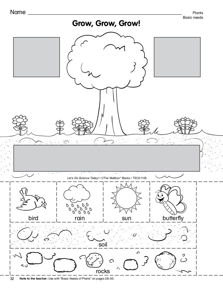 W O R K S H E E T 2 – Plant Needs Worksheet
