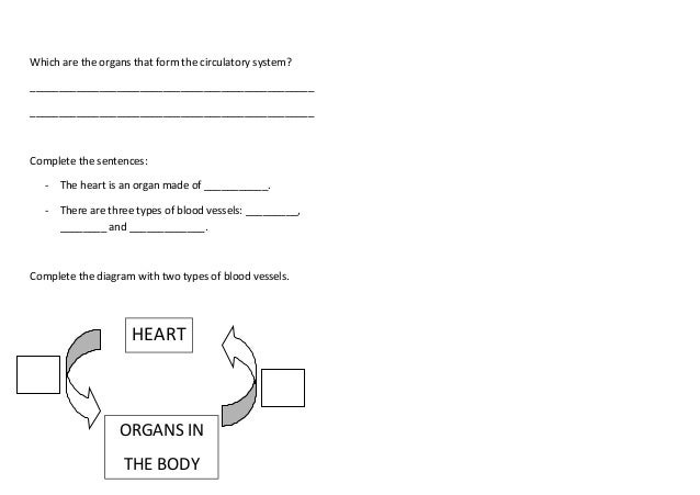 Worksheet 05 the circulatory system – Circulatory System Diagram Worksheet
