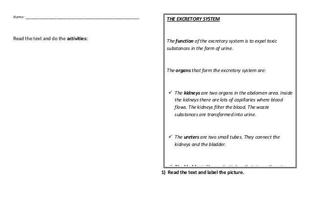 worksheet 06 the excretory system. Black Bedroom Furniture Sets. Home Design Ideas