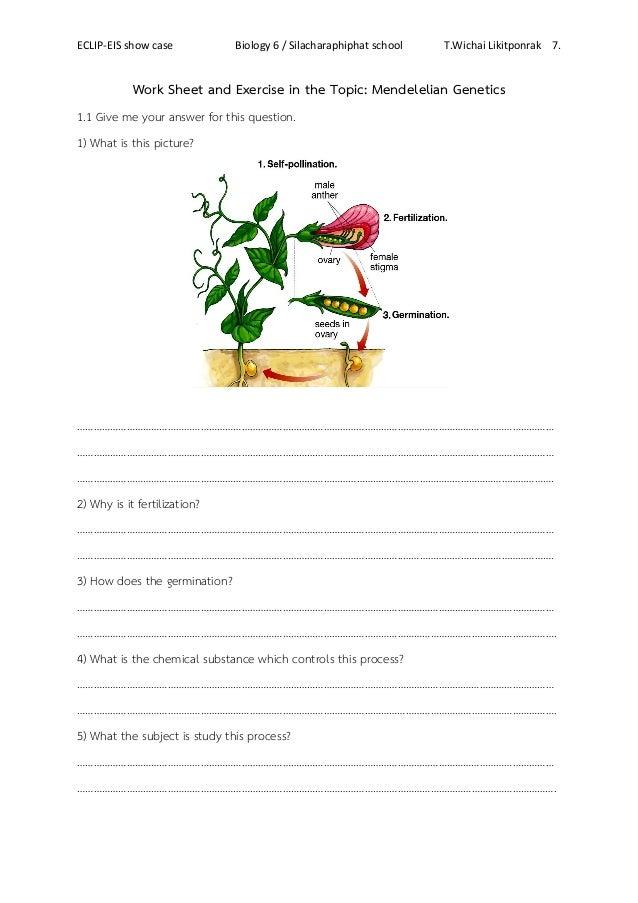 GeneticsAndInheritanceWorksheet-2 - Mendelian Genetics Use this ...