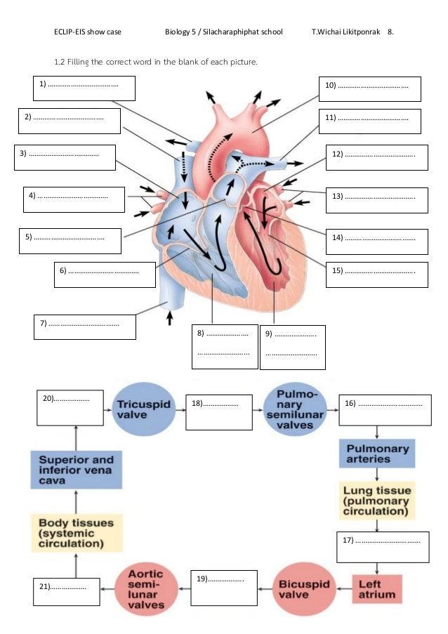 5th grade Science Worksheets: Human heart | GreatSchools