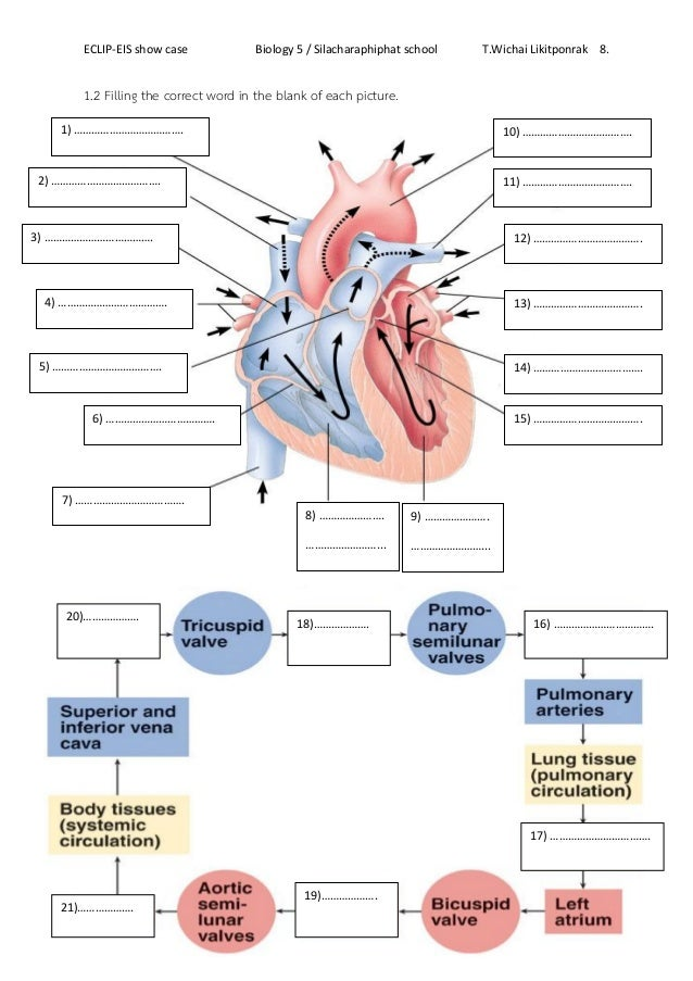 Worksheet human heart – Heart Worksheet