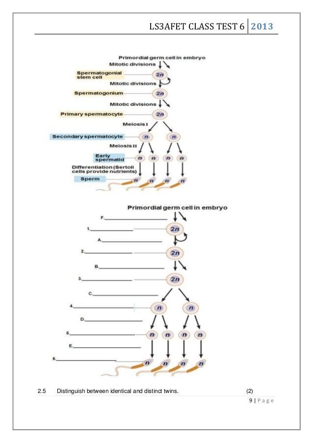 Worksheet human reproduction – Human Reproduction Worksheet