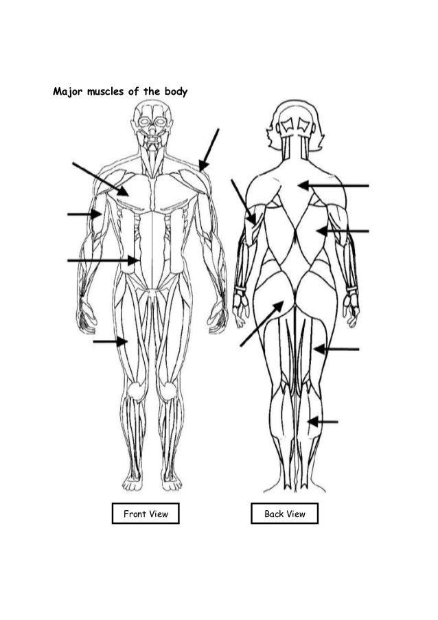 Human Anatomy Labeling Worksheets - Checks Worksheet
