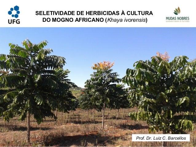SELETIVIDADE DE HERBICIDAS À CULTURA DO MOGNO AFRICANO (Khaya ivorensis) Prof. Dr. Luiz C. Barcellos