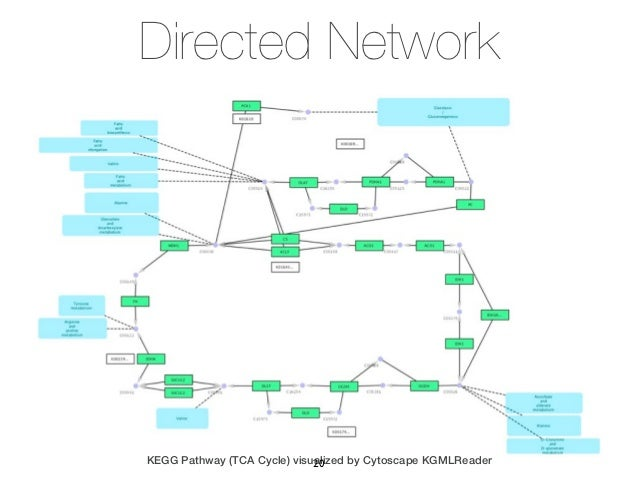 Directed NetworkKEGG Pathway (TCA Cycle) visualized by Cytoscape KGMLReader                             20