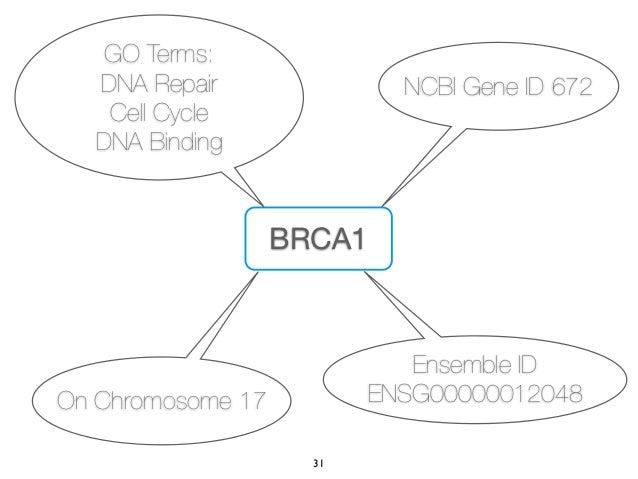 GO Terms:  DNA Repair                NCBI Gene ID 672   Cell Cycle  DNA Binding                   BRCA1                   ...