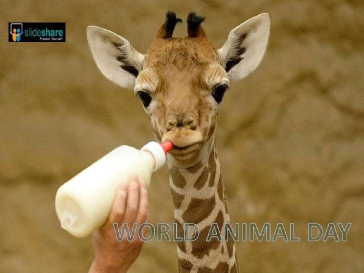 World Animal Day 09 (Pp Tminimizer)