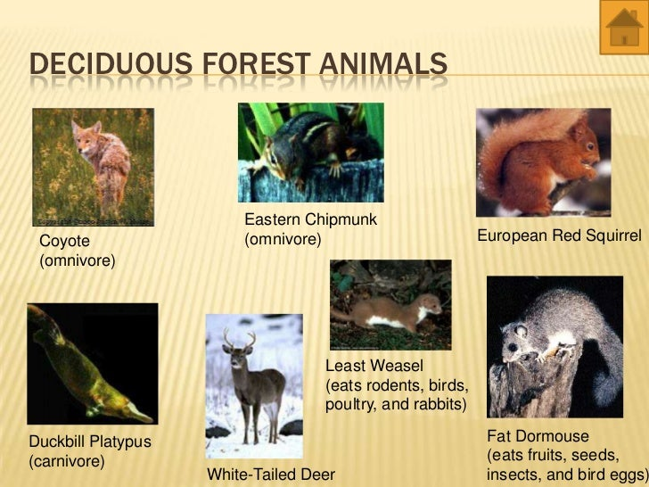 World Biomes Animals And Plants