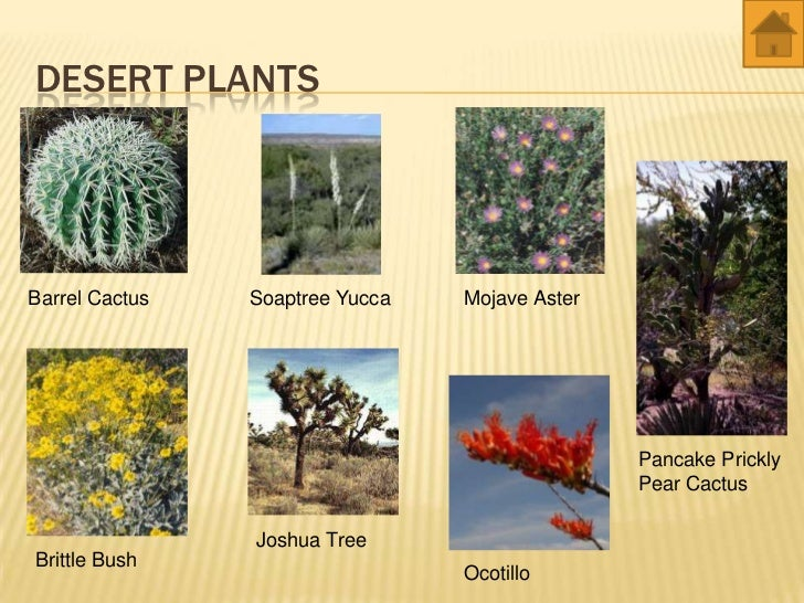 desert plants names list wwwpixsharkcom images