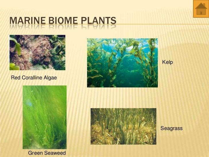 world biomes - animals and plants Egyptian Mongoose
