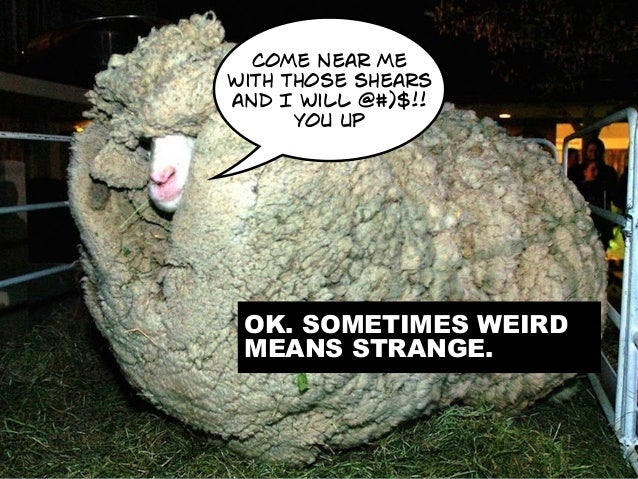 WEIRD = A NICHE. ANY NICHE. ALLERGIC TO WOOL DUDE. THAT'S PERSONAL. come near me with those shears and I will @#)$!! you u...