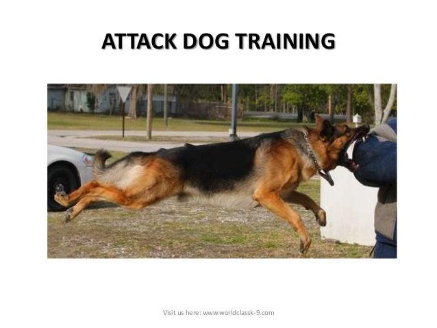 Protection Dog Training Atlanta