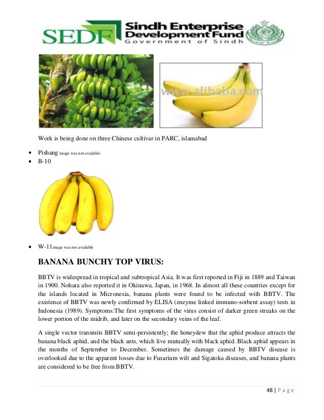 origin of bananas Radiation preservation of foods of plant origin iii  tropical fruits  of economic importance like bananas, mangoes, papayas, pineapples.